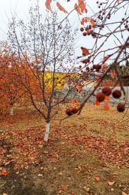 Прекрасные цвета осени