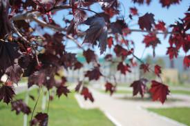 Струится с дерева листва